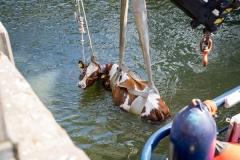 Floating_Farm-3