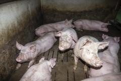 Fotos-2020-10-10-Schweinemast-Schulte-Uebbing-13