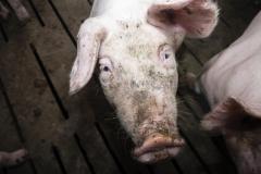 Fotos-2020-10-10-Schweinemast-Schulte-Uebbing-5