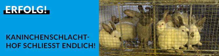 ERFOLG: Horror-Kaninchenschlachthof in Beelitz schließt!