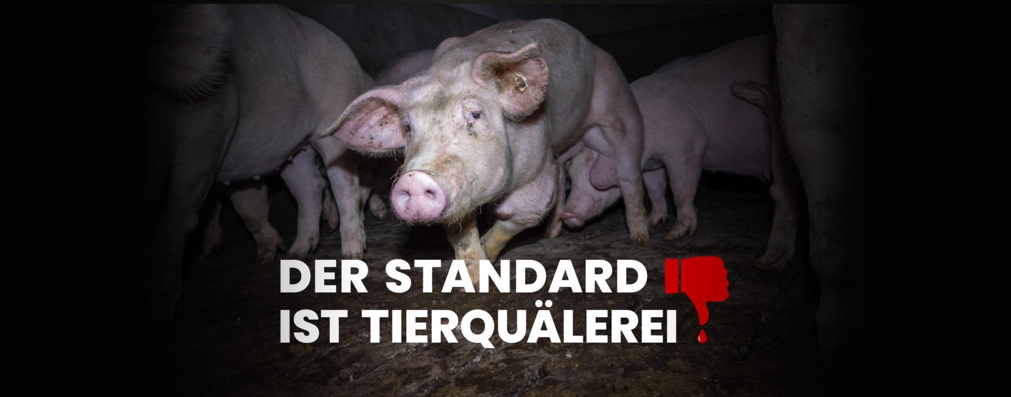 Der Standard ist Tierquälerei