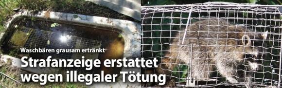 2015__bild-blogeintrag_slider-waschbaer