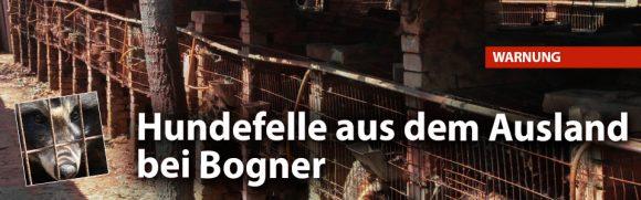 2016__bild-blogeintrag_slider_bogner-hunde