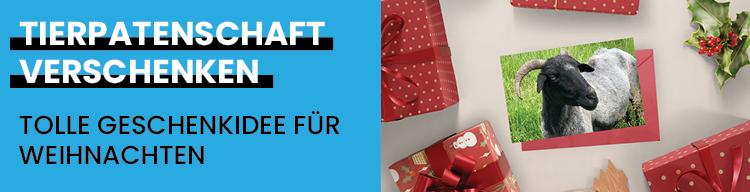 Weihnachten naht – wir haben eine super Geschenkidee!