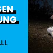 """Versteckte Kameras decken Tierquälerei in """"Tierwohl-Stall"""" auf"""