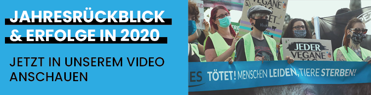 Unser Jahresrückblick: Was haben wir 2020 für die Tiere getan?