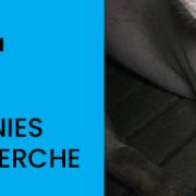 Dritte Undercover-Recherche deckt auf, wie Tierquälerei für Tönnies weitergeht
