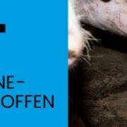 Tierquälerei: Hunderte von Schweinemastbetrieben in NRW betroffen!