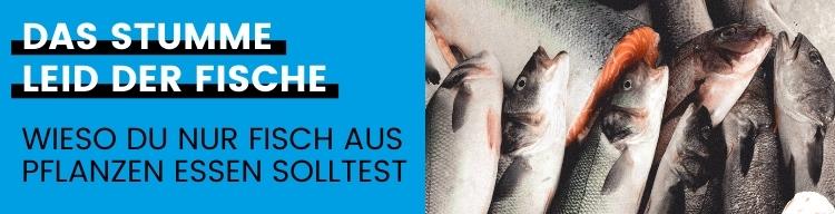 Fischfang – Das stumme Leiden!
