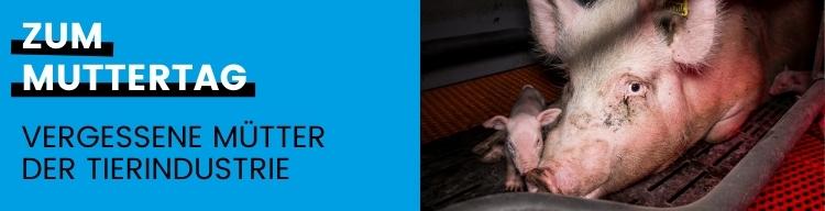 Muttertag: Kein Tag zum Feiern für Tiermütter