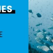 Fische: Die vergessenen Tiere