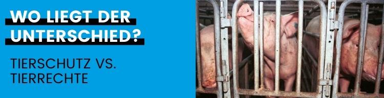 Tierschutz oder Tierrechte: Was hilft Tieren wirklich?