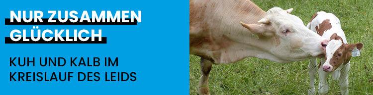 Der grausame Alltag der Kühe und Kälber