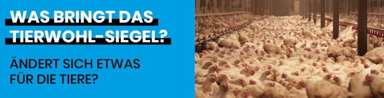 Was bringt das Tierwohl-Siegel den Tieren?