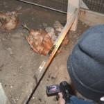 Hühnerbefreiung-19