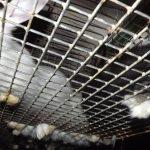 Kaninchen-Horrormast_4