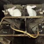 Kaninchen-Horrormast_5