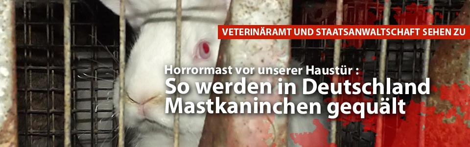 eutsches Tierschutzbüro deckt Horrormast auf