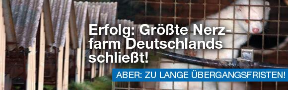 Erfolg: Größte Nerzfarm Deutschlands schließt