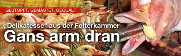 Delikatesse aus der Folterkammer: Gänsealltag: gestopft, gemästet, gequält