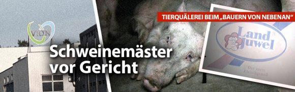 Tierquälerei beim Bauern von nebenan - Schweinemäster vor Gericht