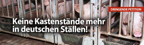 Keine Kastenstände mehr in deutschen Ställen!