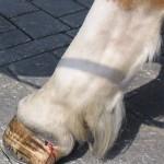 pferdekutschen-berlin-5